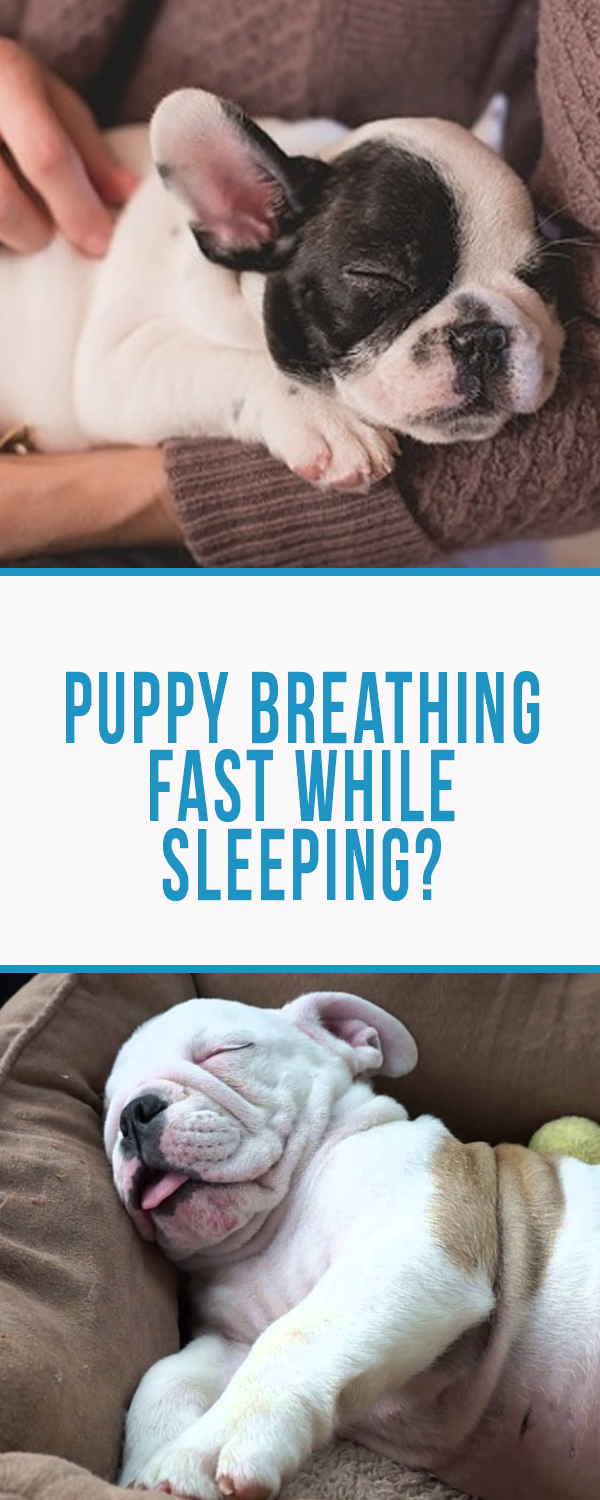 Why Is My Puppy Breathing Fast While Sleeping 3 Best Steps To Take
