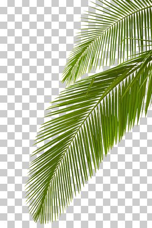 Pin By Chupaalperro On Leaf Clipart In 2020 Leaf Clipart Leaves Beautiful Gif