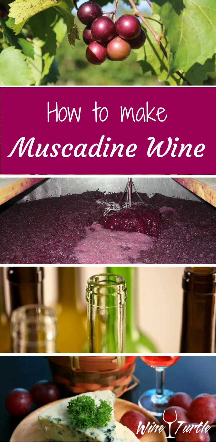 A Homemade Muscadine Wine Recipe You Must Try Muscadine Wine Homemade Wine Recipes Wine Recipes