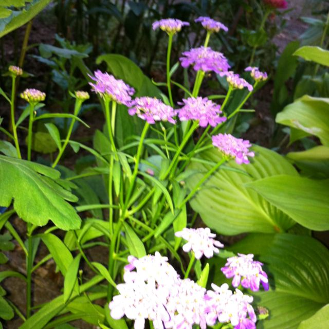 For more details about beautiful flowers and gardens visit www ...