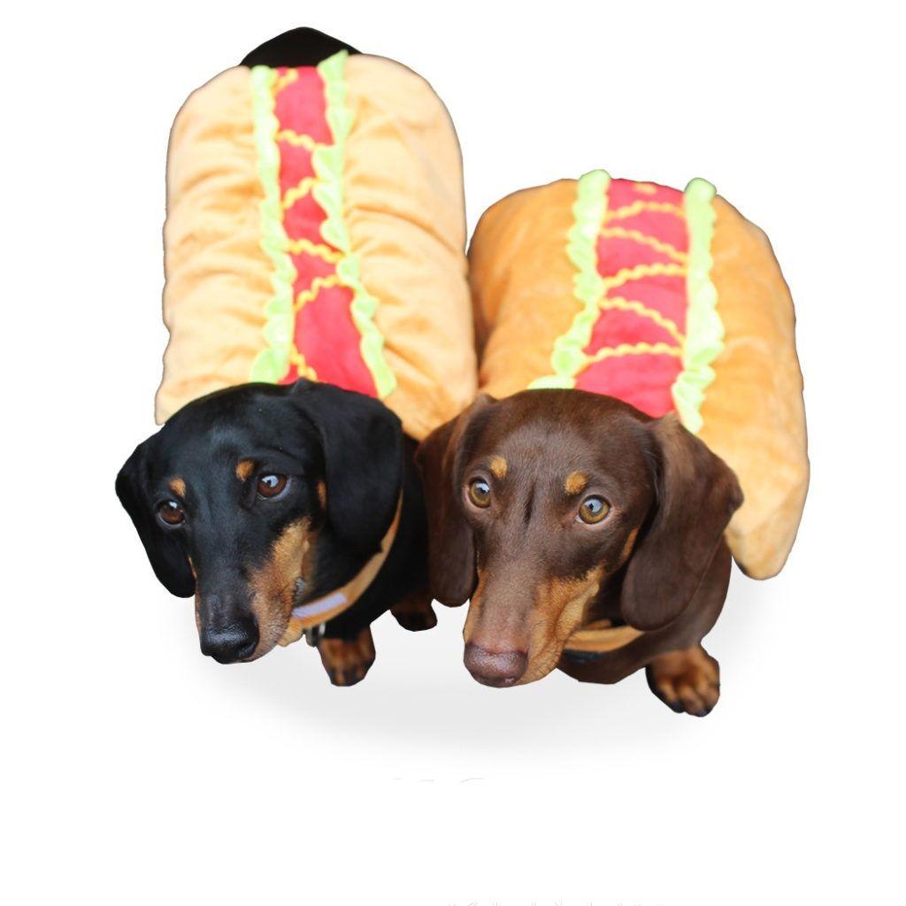 Dachshund Accessories For Dogs Hotdog Costume Dachshund Dog Ramp