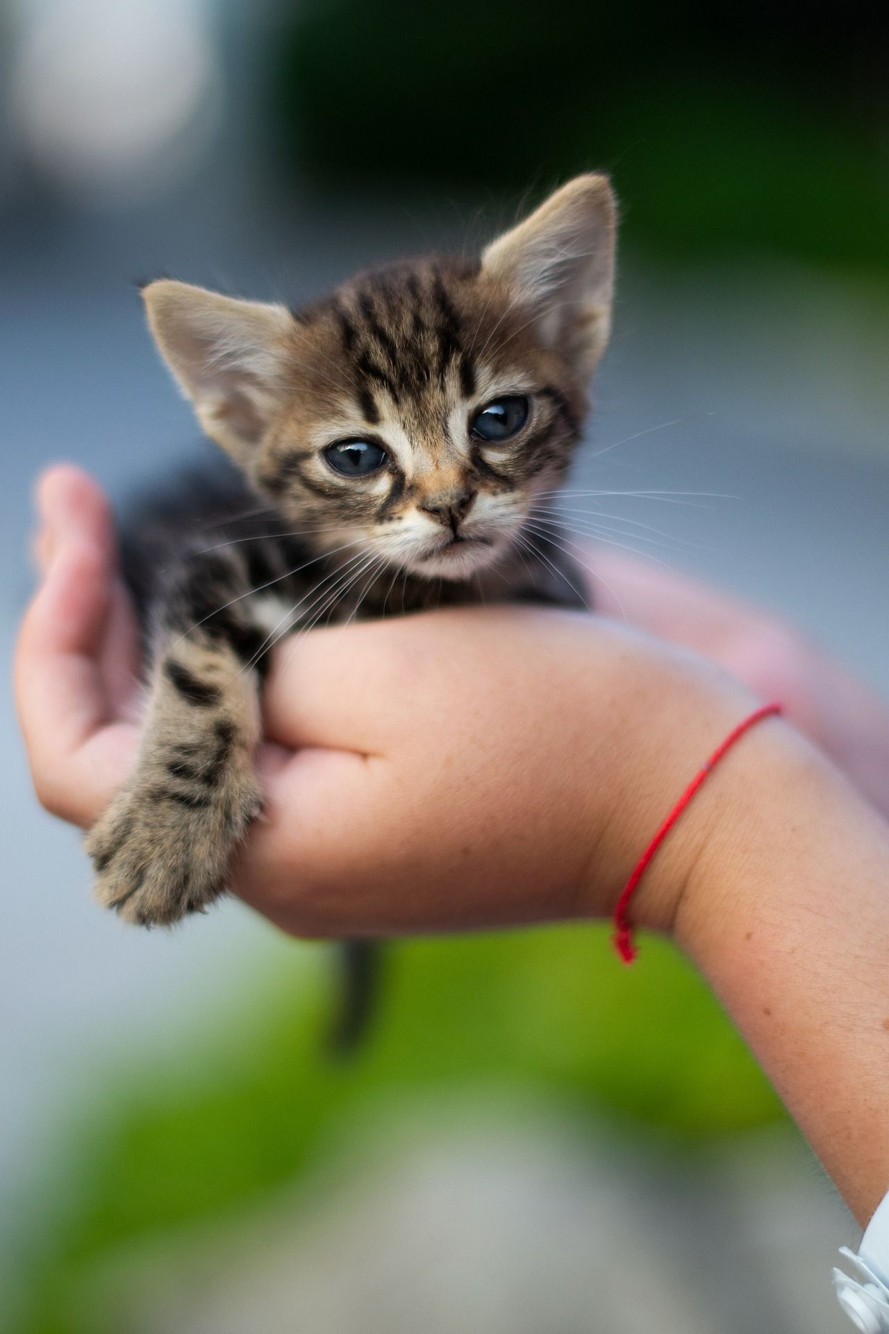 Most Adorable Kitty Held By Human Hands Adorablekitty Tinycat