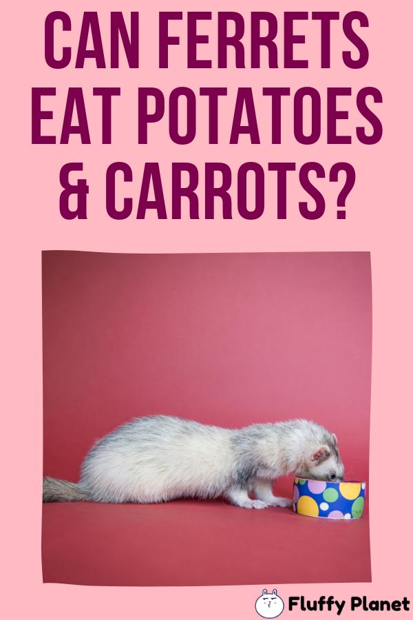Can Ferrets Eat Potatoes And Carrots Ferret Carrots Eat