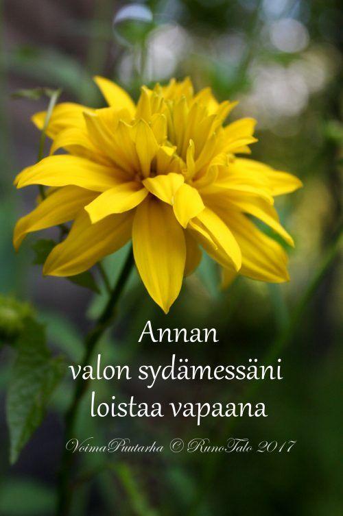 Annan valon sydämessäni loistaa vapaana, kultapallo voimakortti, runotalo.fi