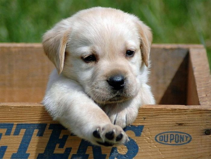 puupppy