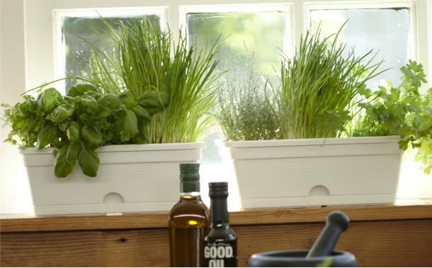 urban allotments herb gardens for tiny spaces windowsill garden indoor herb garden herbs on outdoor kitchen herb garden id=66339