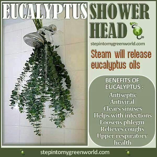 Eucalyptus Shower Eucalyptus Shower Eucalyptus Shower Heads