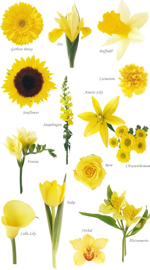 Yellow Wedding Flowers Yellow Wedding Flowers Flower Names Flower Guide