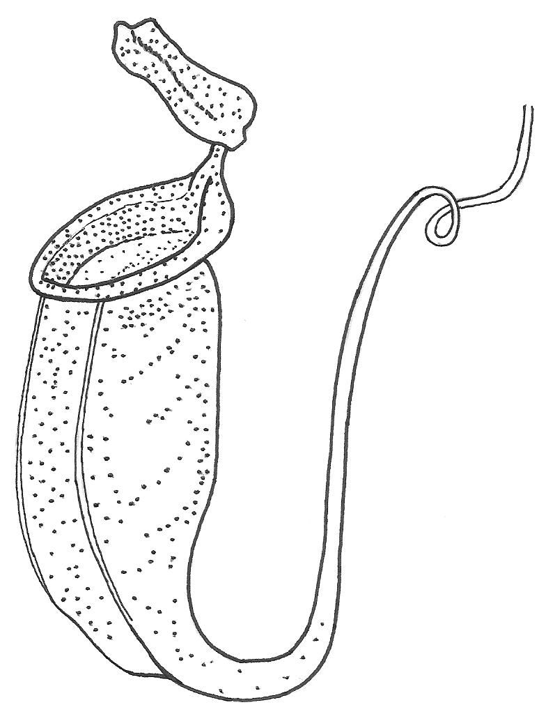 coloring pages of bladderworts plants - photo#1