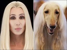 Cher and an Afgan Hound... It's the coat on the ears!