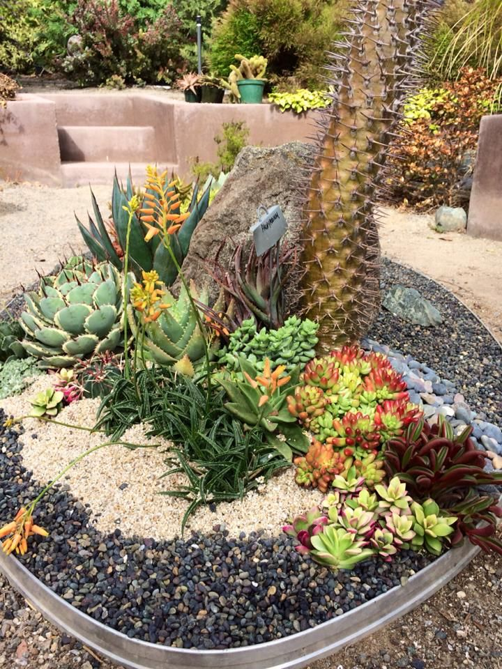 How To Use Succulent Landscape Design For Your Home Succulent