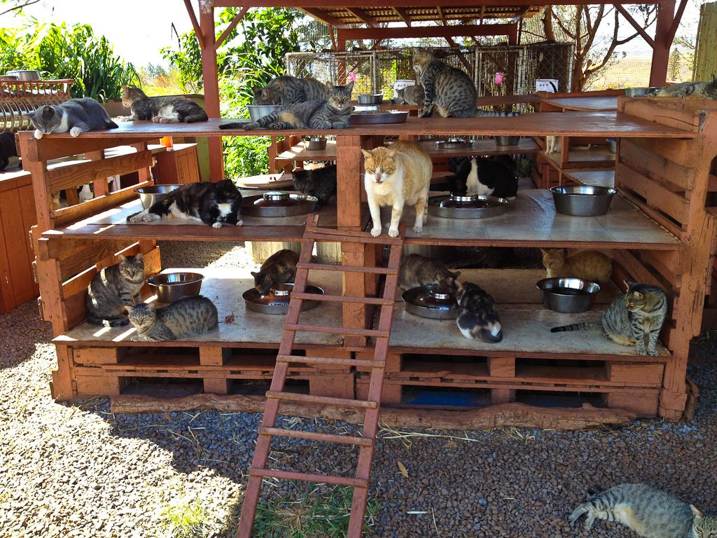 Animal Rescue Cat Heaven in Lanai