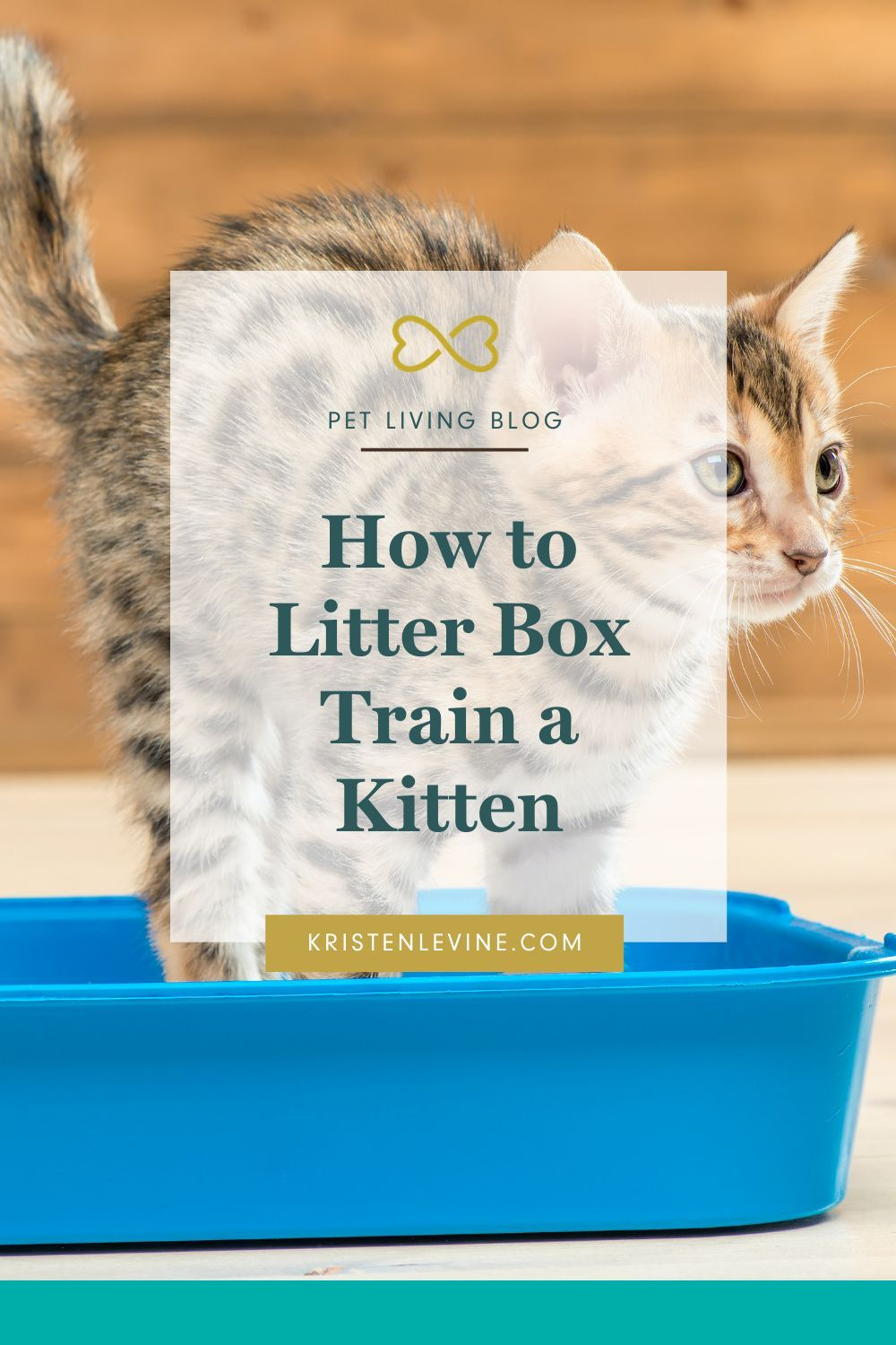 How To Get Your Kitten To Use The Litter Box In 2020 Training A Kitten Litter Box Best Cat Litter