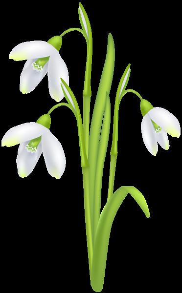Snowdrop Flower Transparent Image Flowers Free Clip Art Clip Art