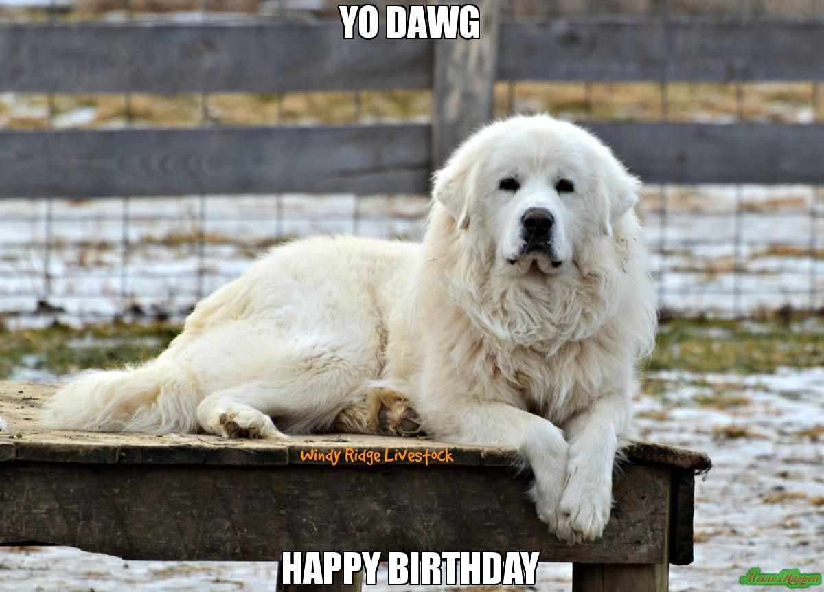 Yo Dawg Happy Birthday Custom Great Pyrenees Dog Great
