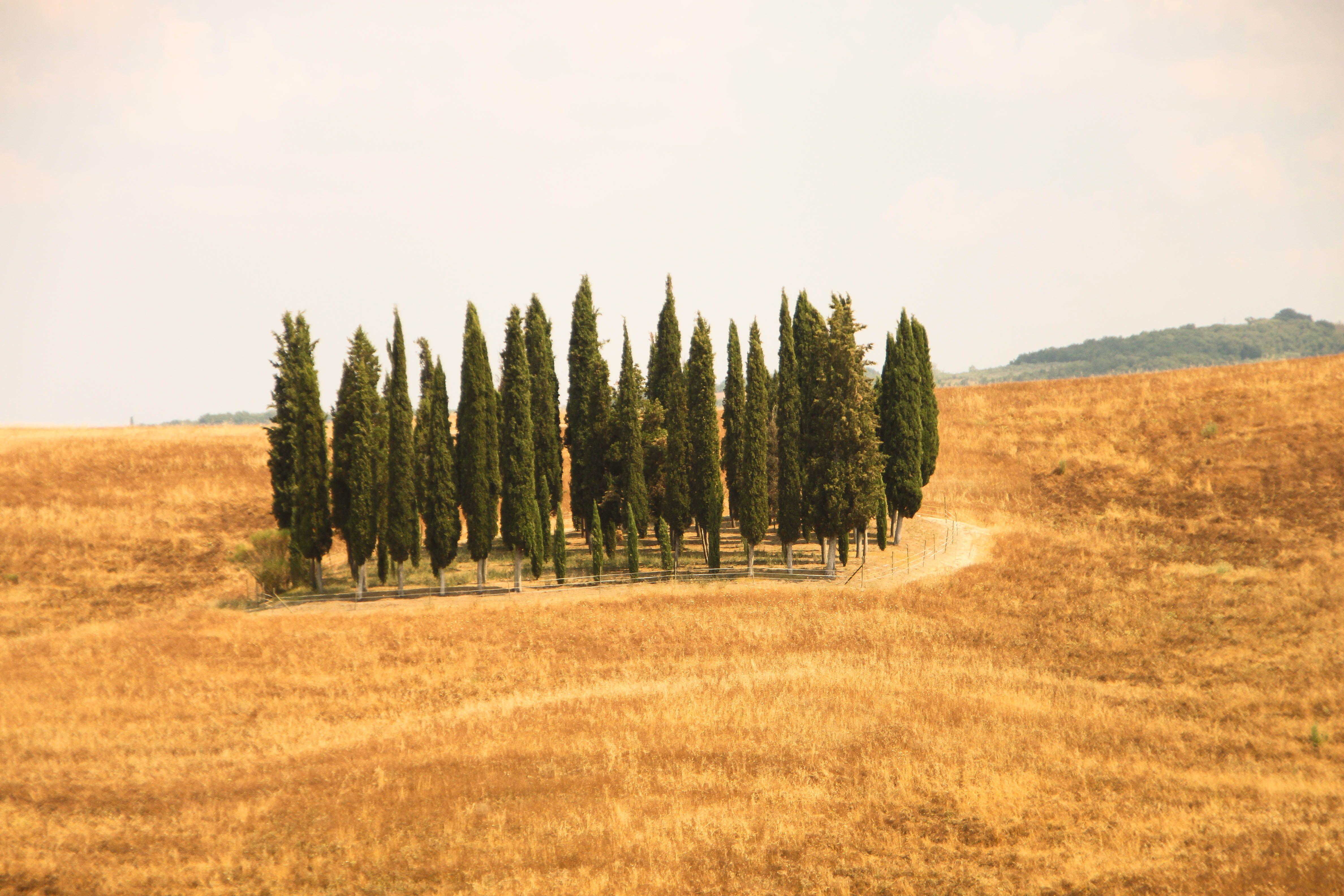 Zypressen. Crete. | Zypressen | Pinterest | Zypressen und Toskana