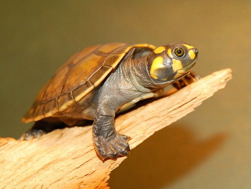 A house not a home was the picture satan painted turtle