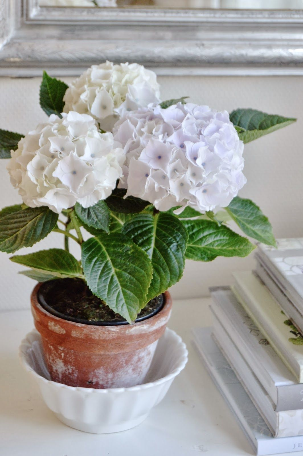 farmhouse decorating ~ terra cotta pot in white bowl | farmhouse