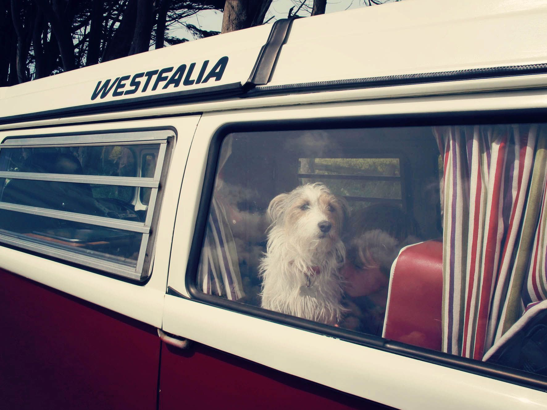 Pet friendly vw camper van hire from cheltenham gloucestershire as they believe a family holiday
