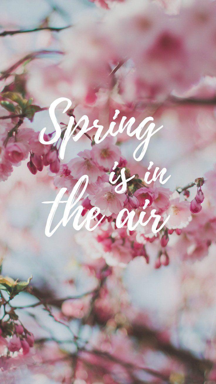 Cherry Blossom iPhone Wallpaper Collection Fondos para