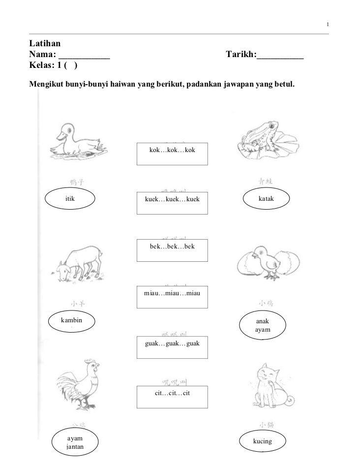 Image Result For Bunyi Haiwan Latihan Kucing Pengikut
