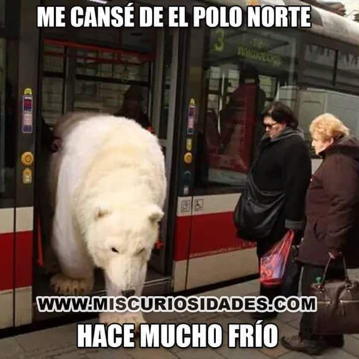 Pin By Sere On Hum Espanol Silly Memes Funny Memes Best Memes