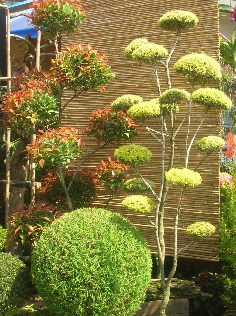topiary | home sweet home | Pinterest | Topiary, Garden planning and ...