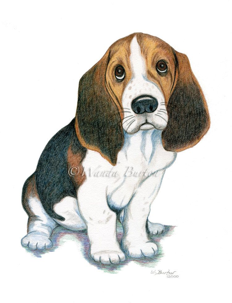 Basset Hound Or Beagle Puppy Dog Art 8 X 10 20 32 X 25 4 Cm