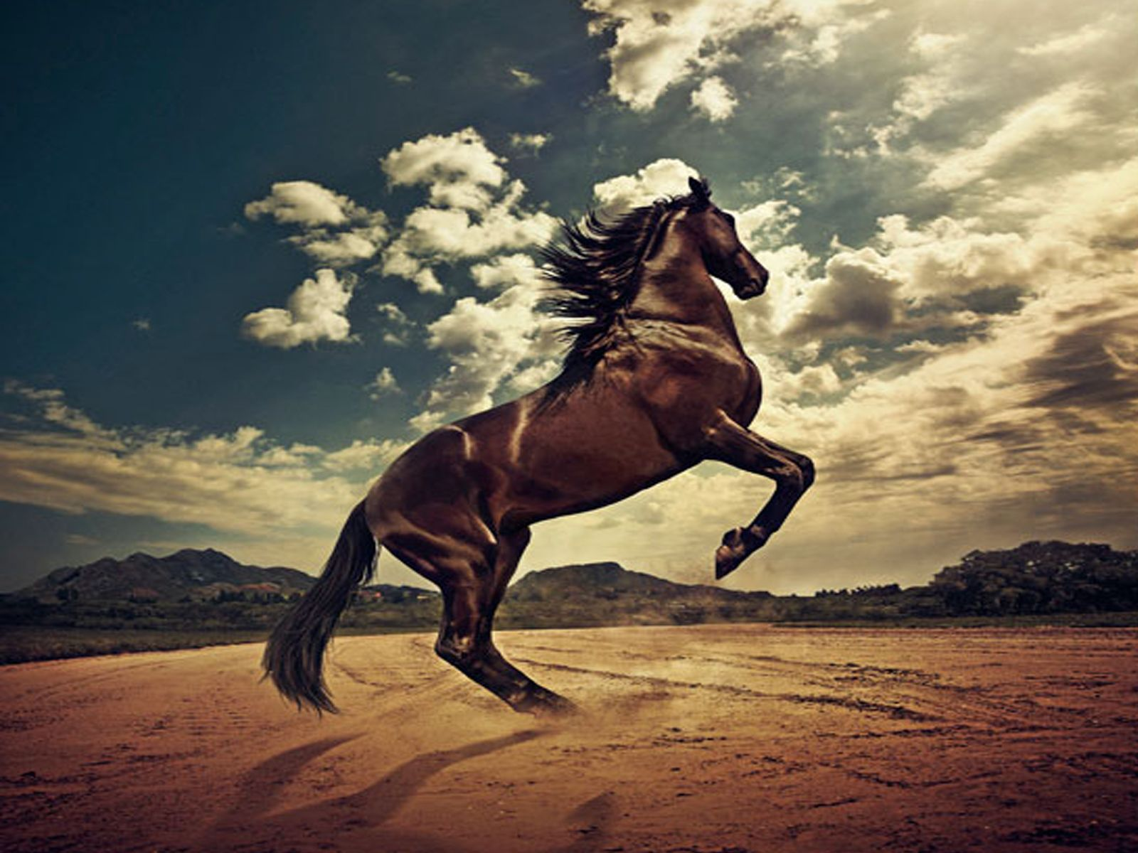 Horse Wallpapers Horse Wallpaper Horses Most Beautiful Horses