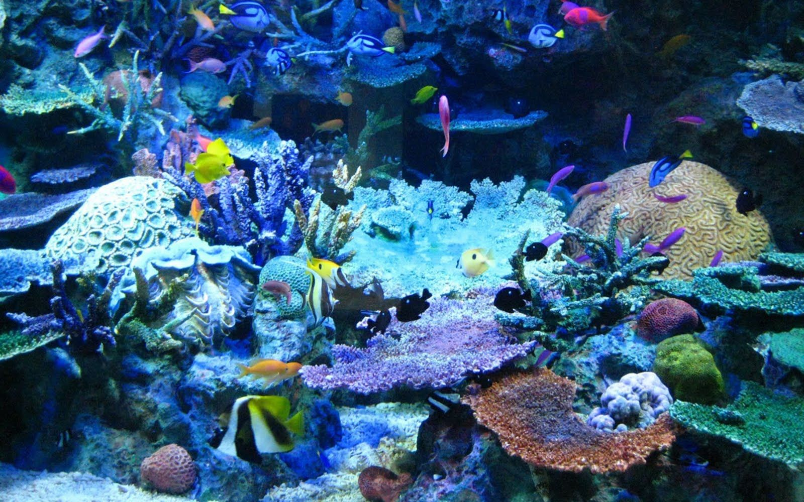 Real photos of sealife with coral beautiful coral reef for Reef tank fish