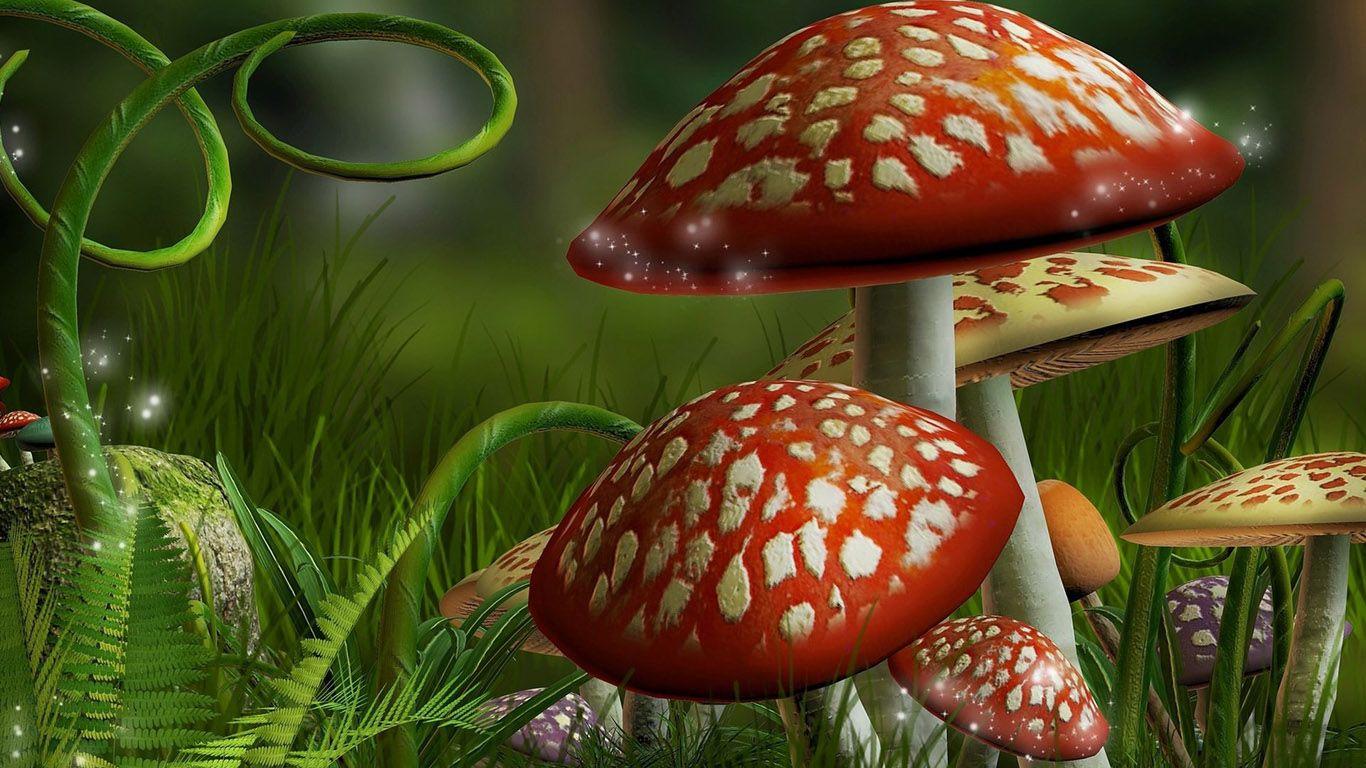 mushroom desktop background - Google Search | mushrooms ...