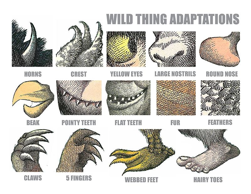 Teach Animal Adaptions Using Where The Wild Things Are Pinterest