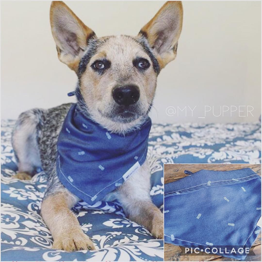 Does Your Pupper Want A New Look Our Premium Quality Dog Bandanas
