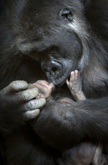 Cabarceno Wildlife Park in Northern Spain is experiencing high population   growth, and every birth has been documented by freelance photographer Marina   Cano