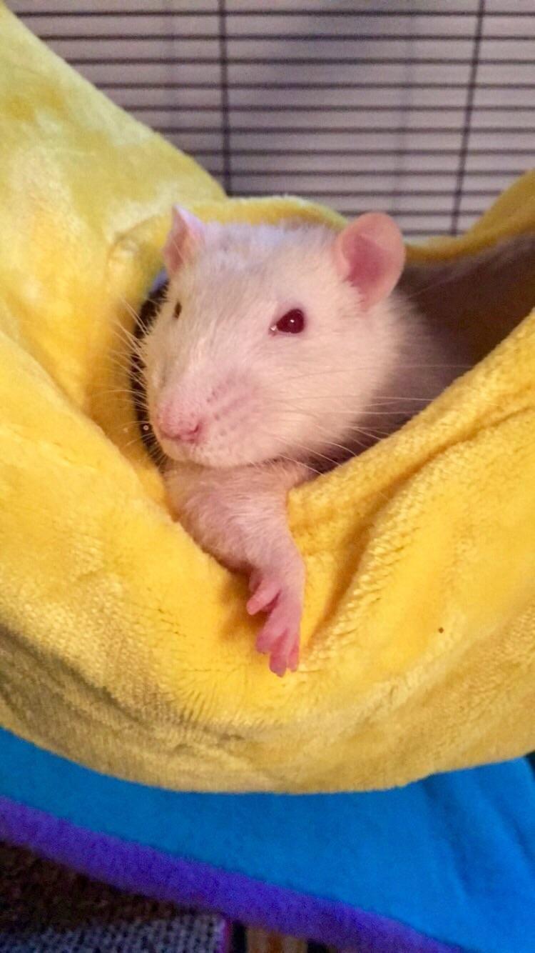 I donut always sleep in hammocks but when i do i sleep in my banana