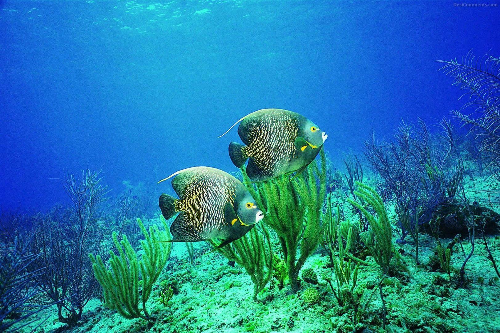 Underwater Underwater Photography Paradise Ocean