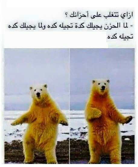 Pin By Positive Queen On Funny Arabic Funny Funny Pictures Funny Jokes