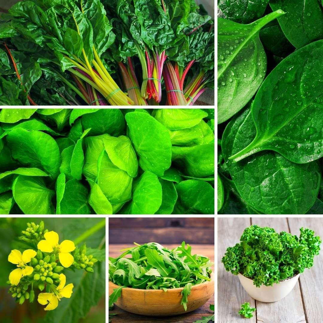 20 Easy Vegetables To Grow In Grow Tent Slick Garden
