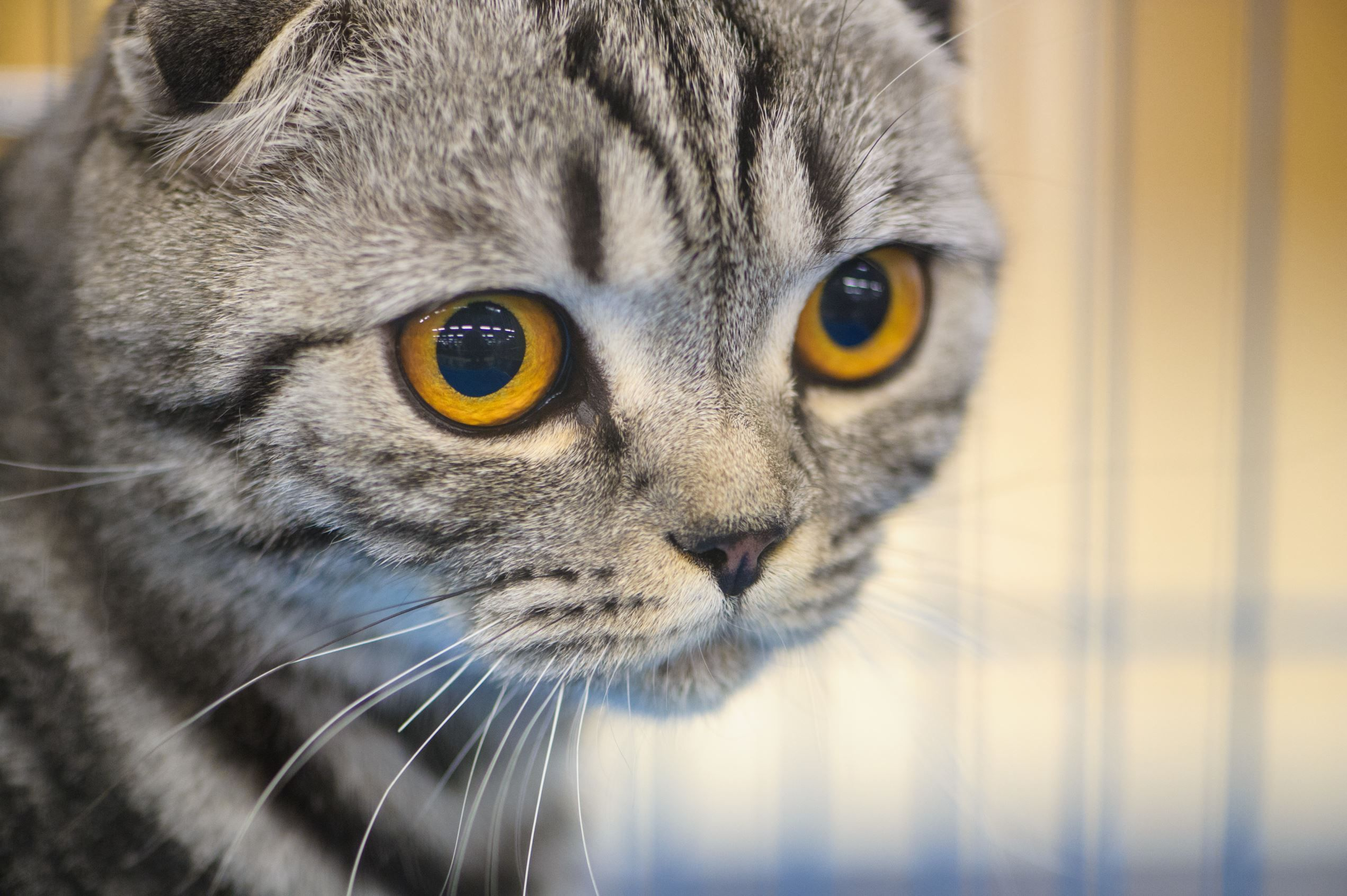 Normally, a cat has around 12 whiskers on each side of its