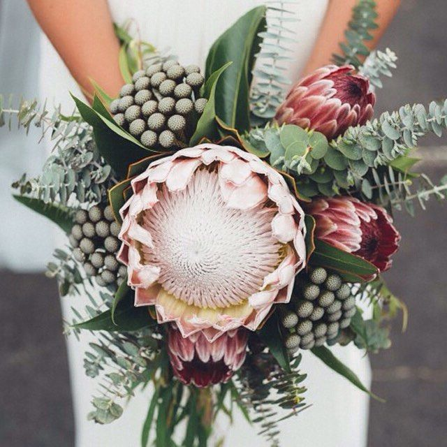 Nouba On Instagram I Don T Think We Ll Ever Tire Of The Regal King Protea It Might Not Be An Aussie Native Bu Protea Wedding Protea Bouquet Wedding Bouquets