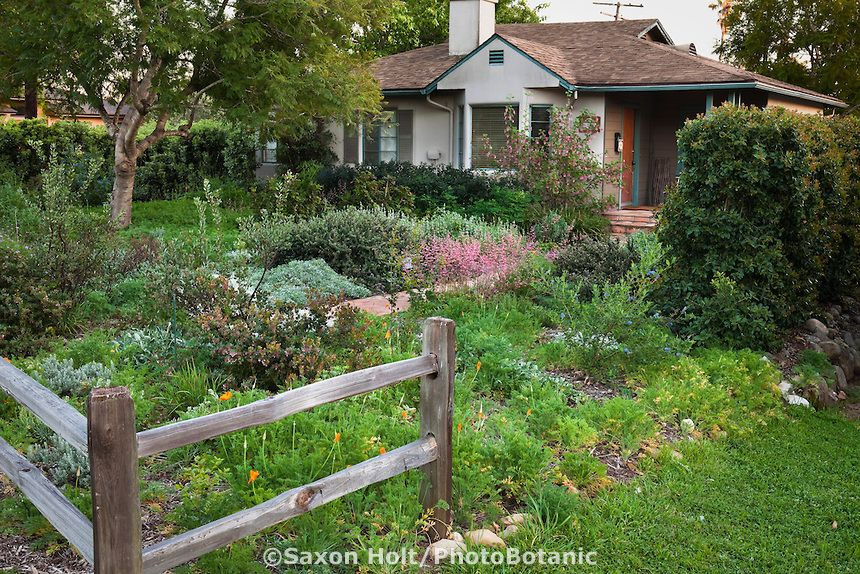 California native plant front yard lawn alternative garden for Native plant garden designs