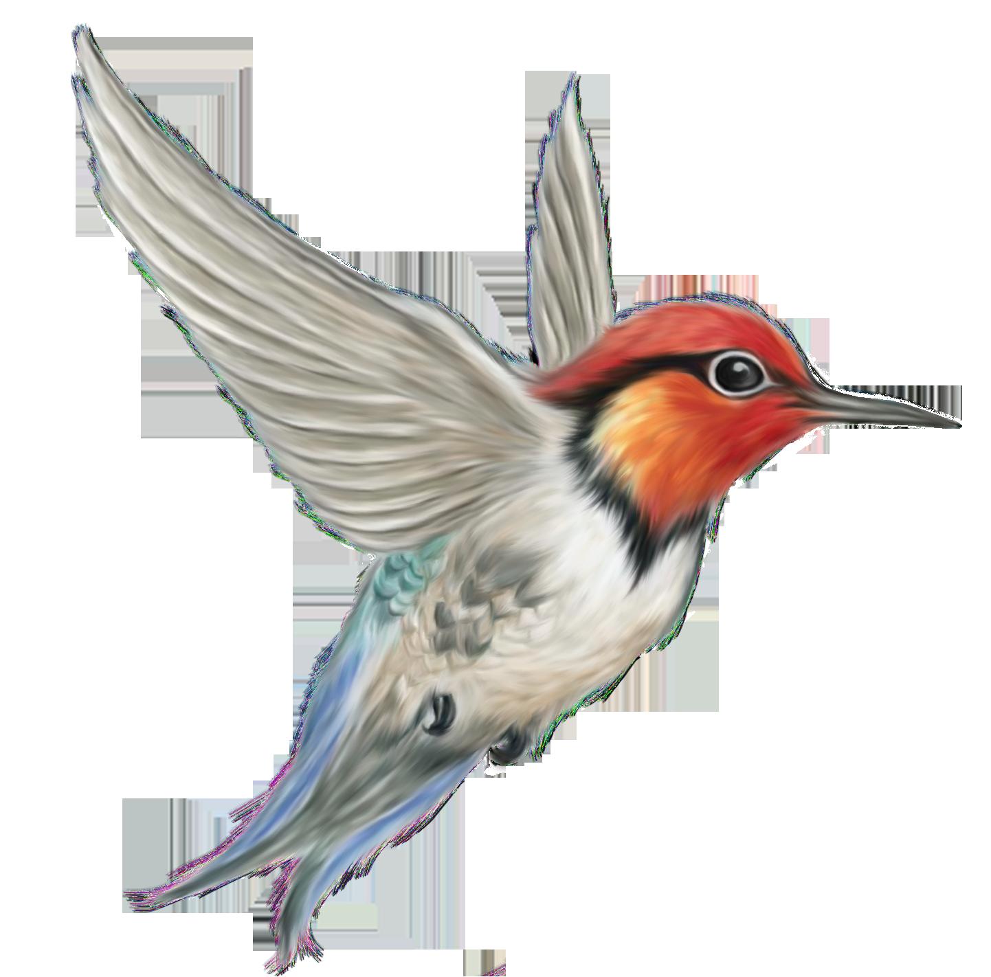 Image Result For Birds Png Bird Clipart Vintage Birds Animal Illustration Art