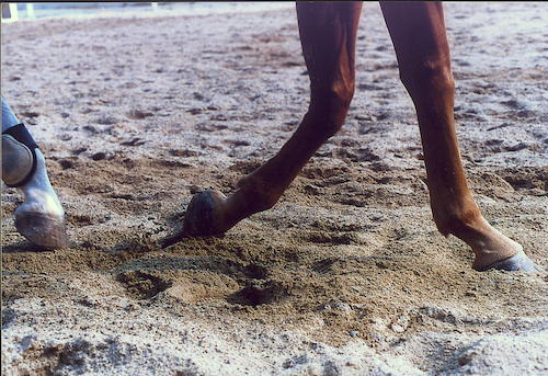 Footing Science: FEI Sport Horse Arena and Track Surfaces Report Download