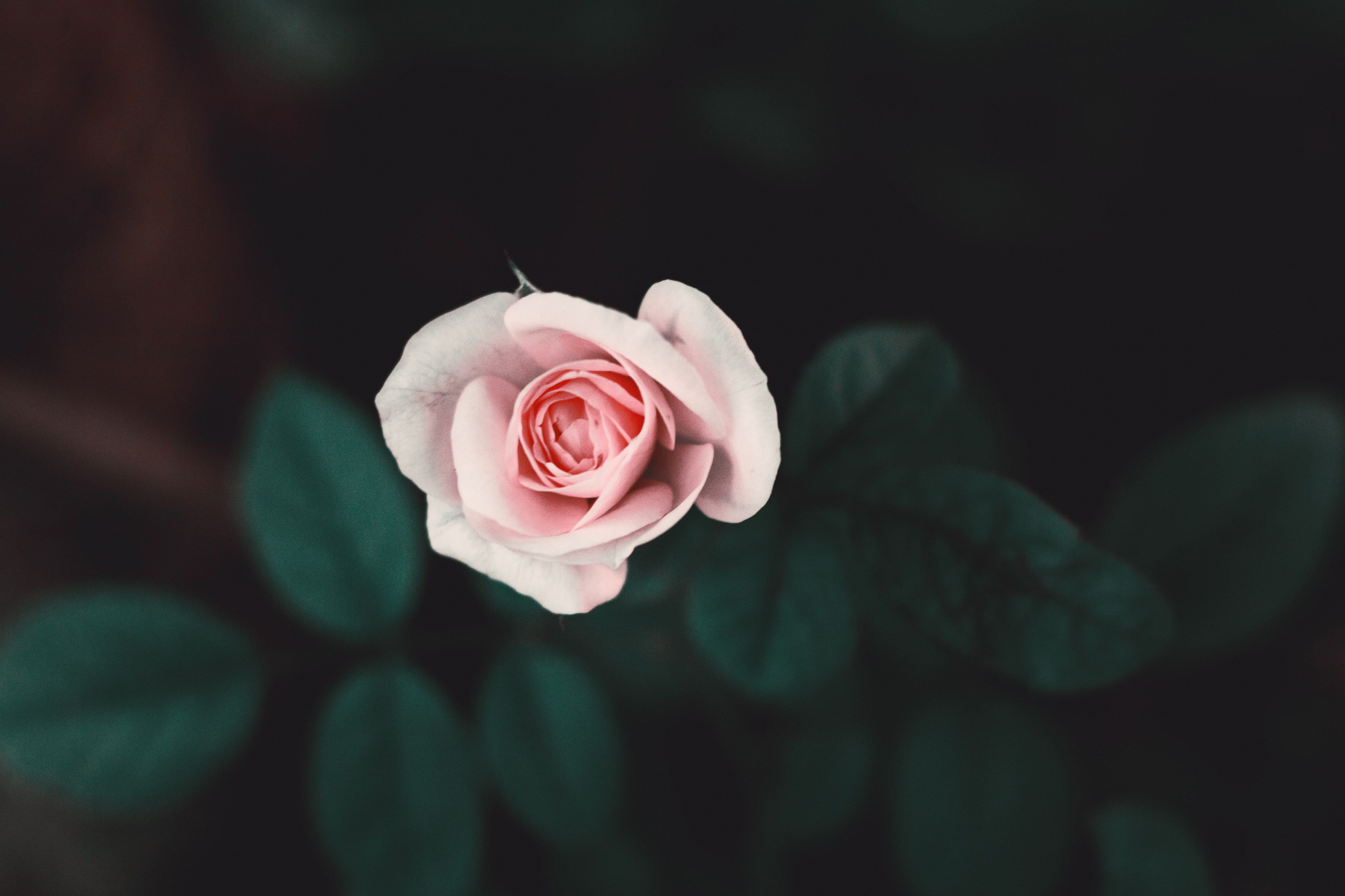 Flowers pic flower images pexels free stock photos with flowers pic flowers pic flower images pexels free stock photos with flowers pic flower deliveries with flowers pic good most beautiful red flowers with flowers pic izmirmasajfo