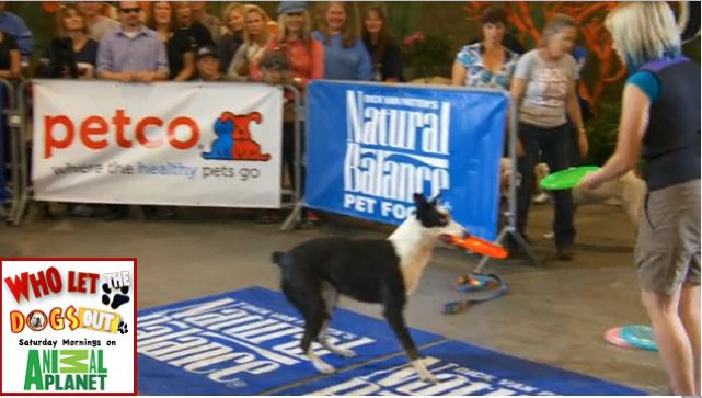 Dog Auditions For The Most Talented Dog In America Natural Pet