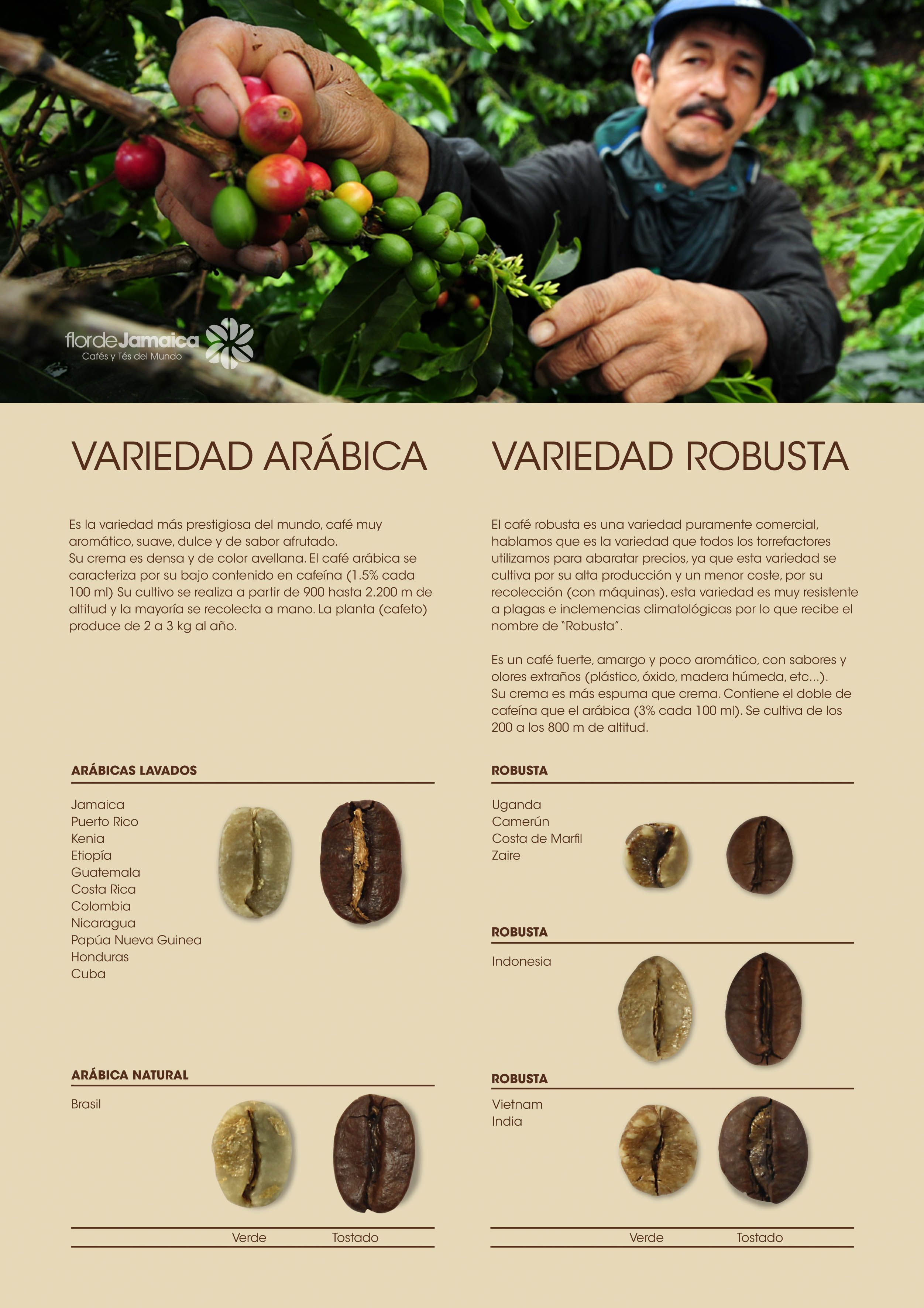 Diferencias entre el café 100% Arábica y Robusta.