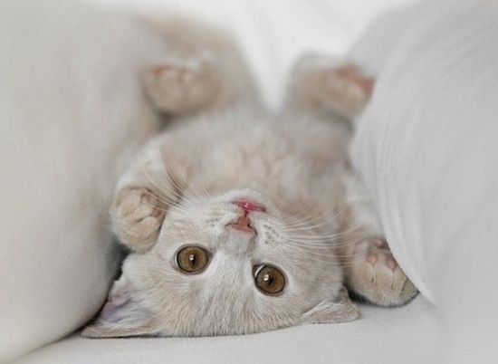 When life feels like it's upside down...just look cute.