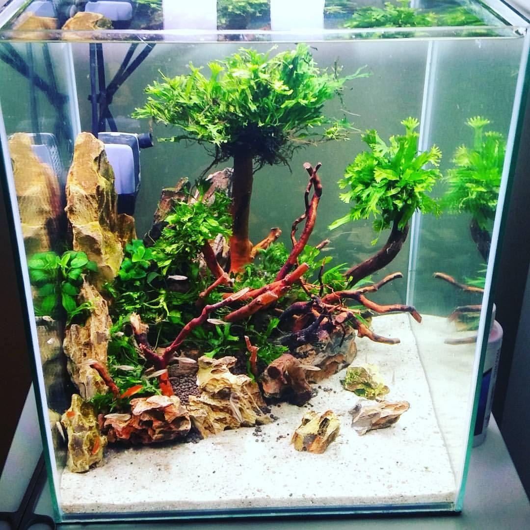 Nanotank Aquarium Natureaquarium Plant Nature Dragonstone Layout Aquascaping Akwarium Aquascape Aquarium Sand Aquarium Fish Tank Tropical Fish Tanks
