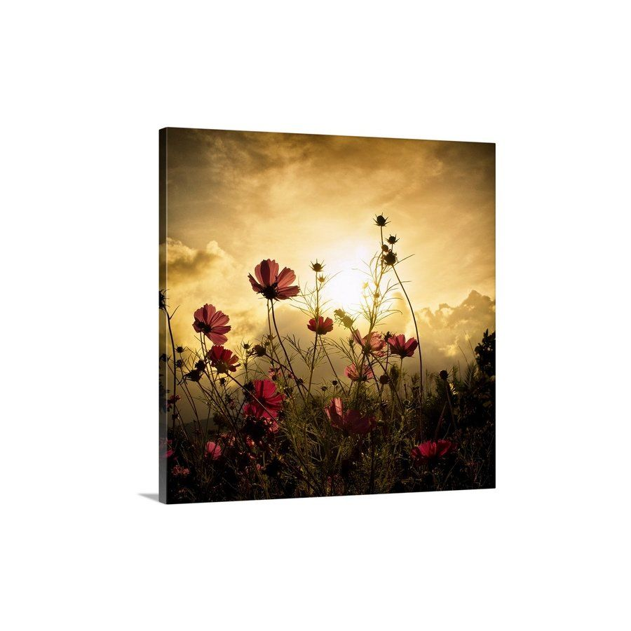Watching the Sun\' Photographic Print on Canvas | Wall art ...