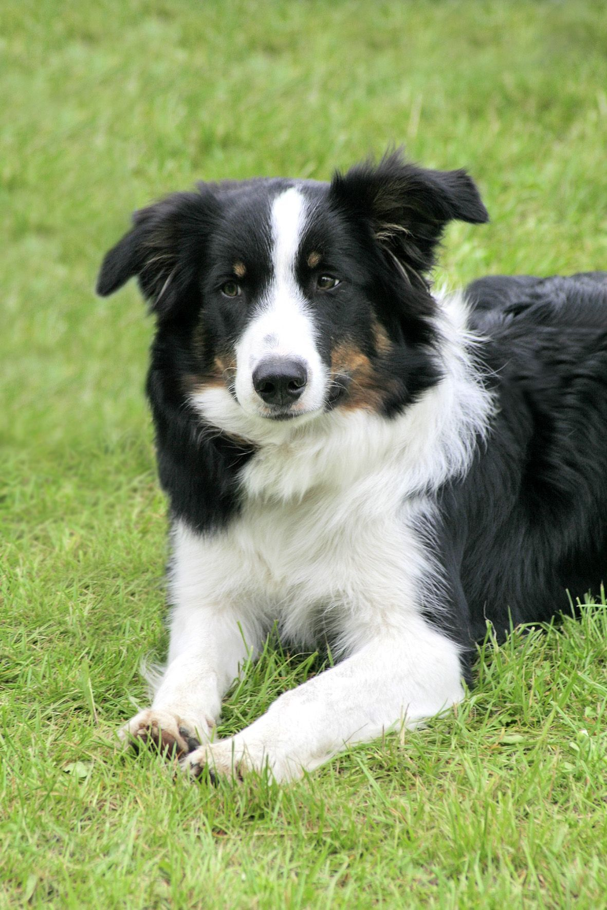 Pin By Big Barker Dog Beds On Friendly Collies Border Collie Dog